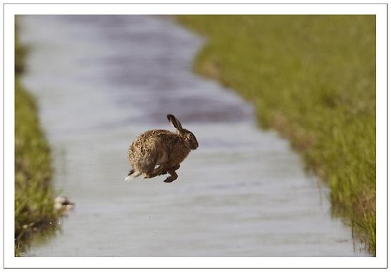 haas slootje springen