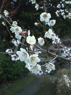 春の息吹き感じます。