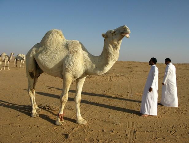 saudijska arabija stipendje