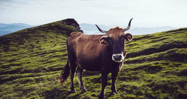 27 января - Сегодня день Нины. На Нину почитай скотину