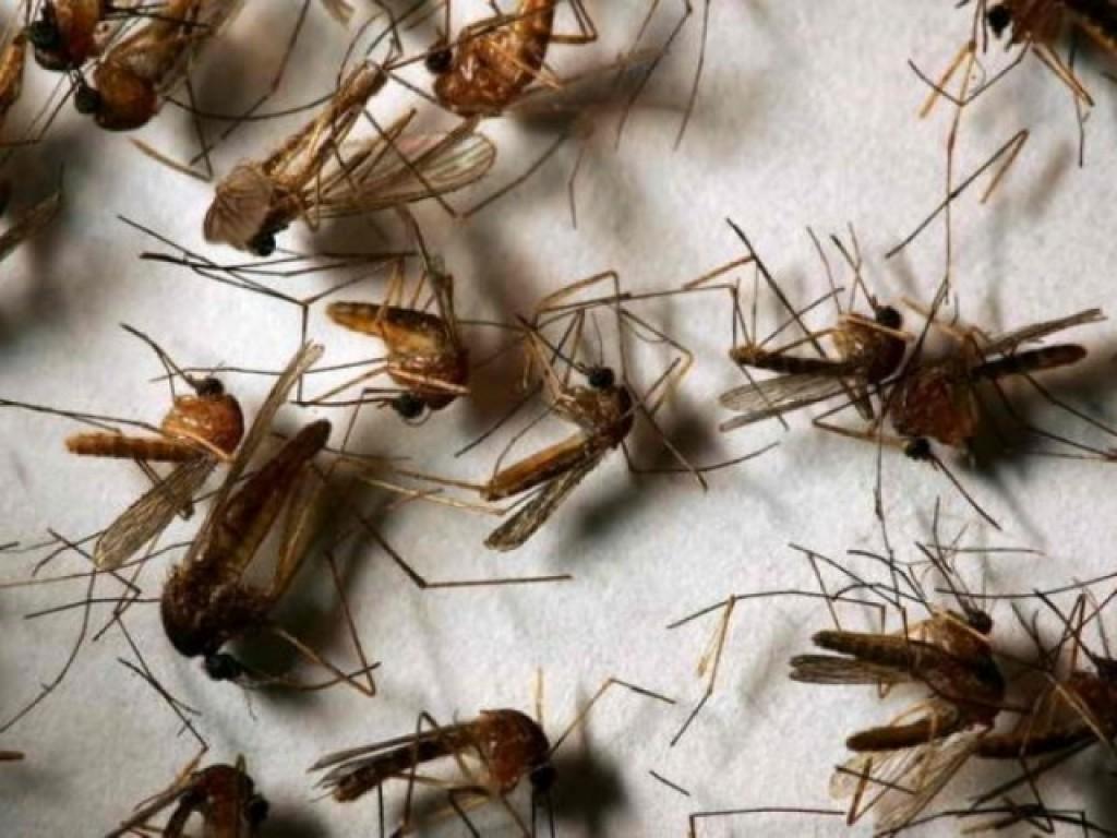 Продолжительность жизни комаров в различных условиях