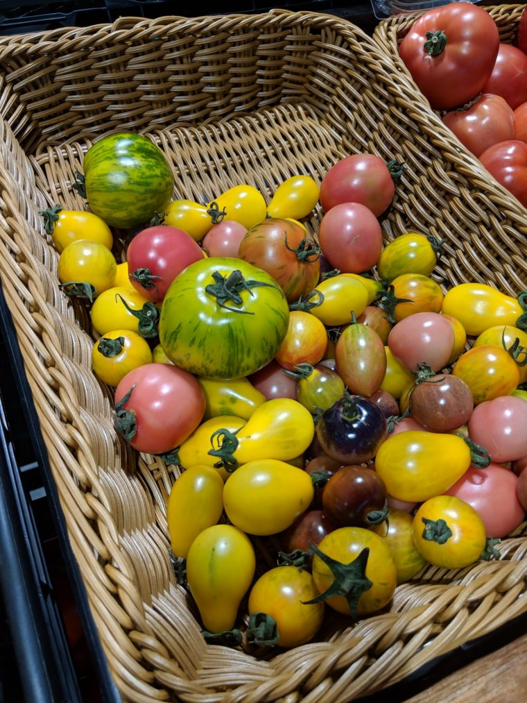 Tomatoes - PX2