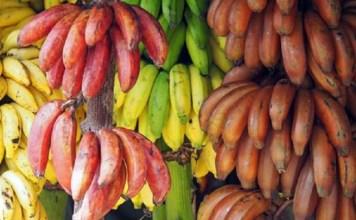 Banana Categories