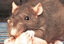 Rat Bite : Health Tips, Beauty Tips, Daily Health Tips, Tamil Maruthuvam Tips, Top 10 Best Health Benefits, Easy To Follow Daily Health Tips