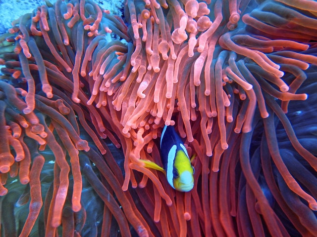 Soft coral needs protection