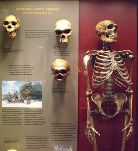 Human Origins. Author: Patrick Swint. This file is licensed under the Creative Commons Attribution 2.0 Generic license.