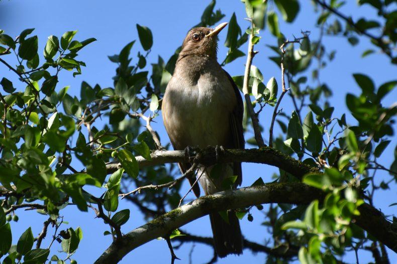 kooky-bird-looking-down-solis-de-mataojo