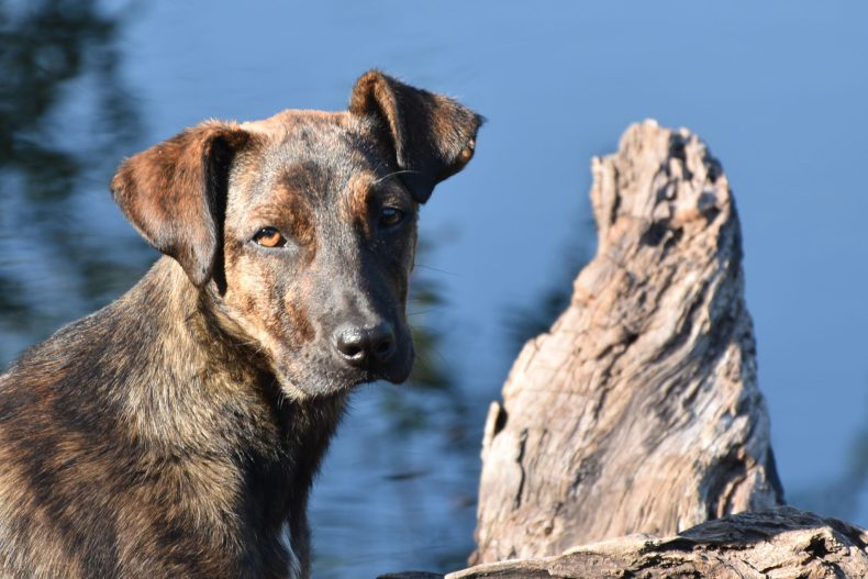 puppy-wood-solis-de-mataojo