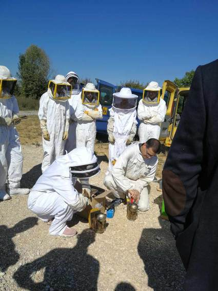 ruche-grand-chalon-apiculteurs