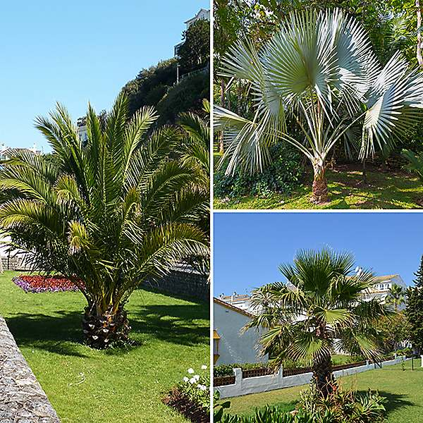patio palm tree collection set of 3
