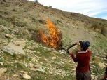 An actual, Biblical-esque burning bush.