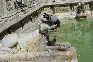 Siena, Brunnen