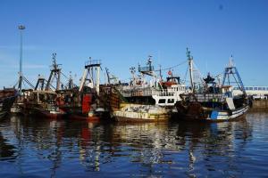 Essaouira, Fischereiflotte