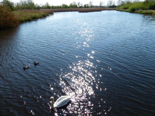 Kuhbrücksau mit Wasservögeln