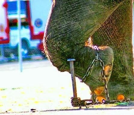 Ο Αλυσοδεμένος Ελέφαντας | Η Ιστορία που πρέπει να διαβάσεις