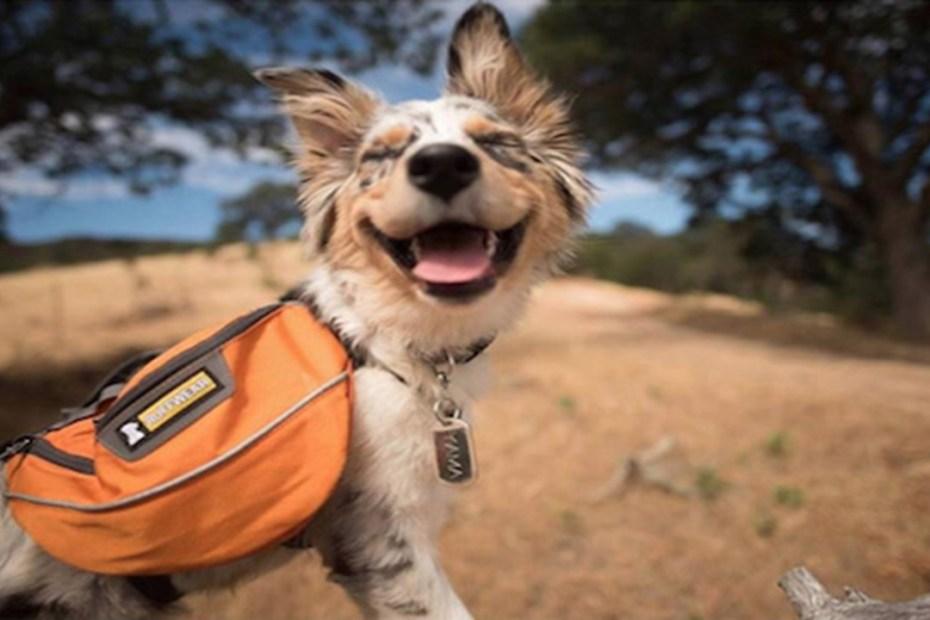 σκύλος φύση