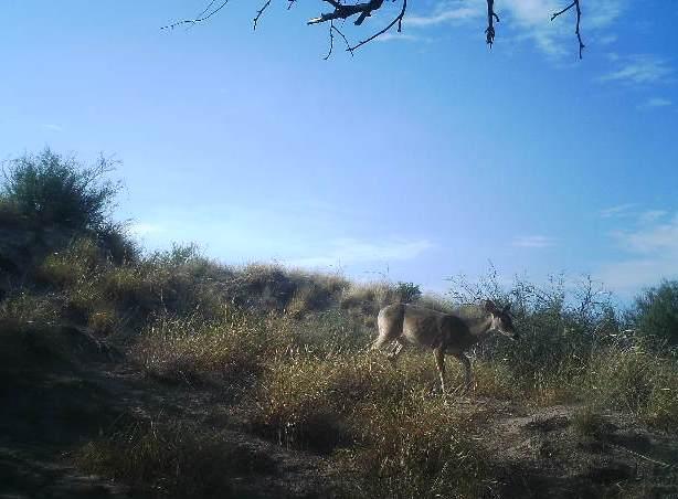 A Deer Hangin Out
