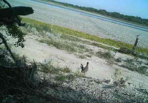 Bird and Rio Grande