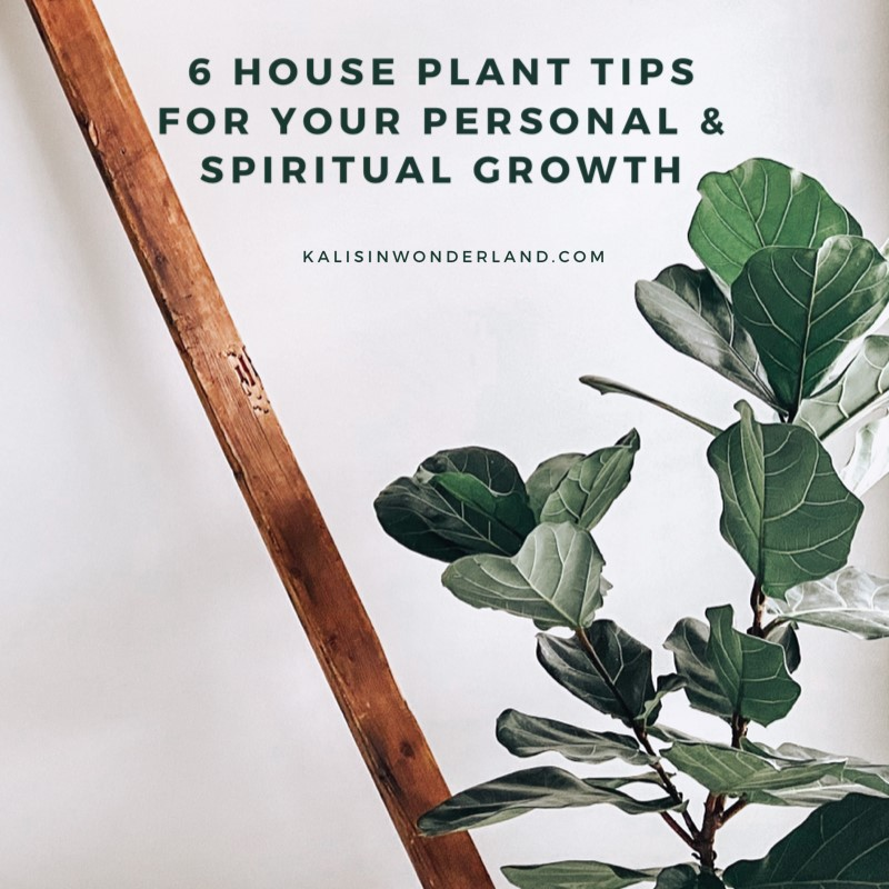 house plant tips for personal spiritual growth feature