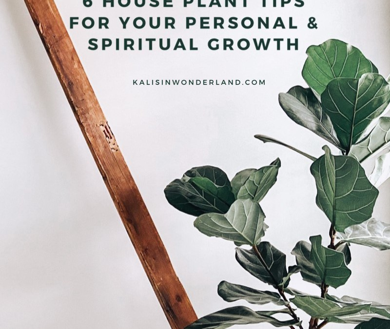 6 House Plant Tips For Personal & Spiritual Growth