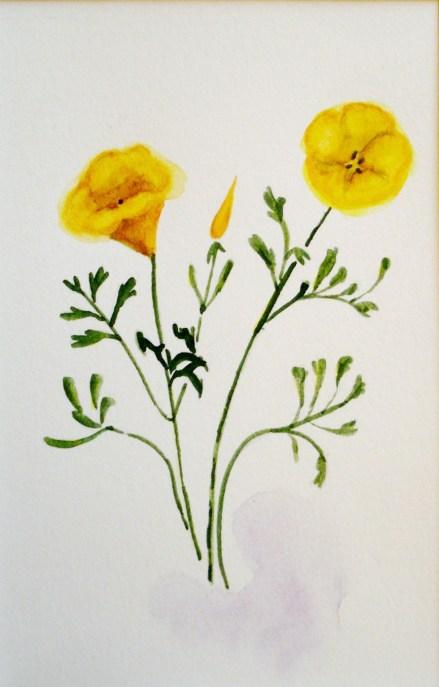 5 x 7 w/c California poppy