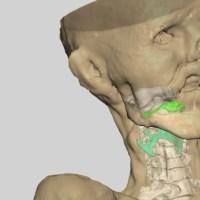 Jäämuumio Ötzin ääni mallinnettiin digitaalisesti