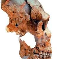 Kukkia, ravintokasveja ja väkivaltaa – Tutkimuksia neandertalinihmisistä