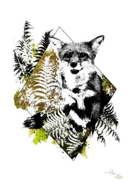 """""""Vulpes Vulpes"""" (Der Fuchs) – Illustration aus der Serie HelvEdition von Ka L-O-K   Graphic Arts"""
