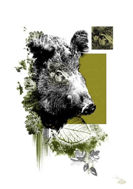 """""""Sus Scrofa"""" (Die Wildsau) – Illustration aus der Serie HelvEdition von Ka L-O-K   Graphic Arts"""
