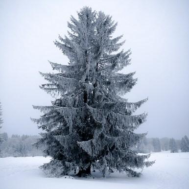 Cold Majesty by Ka L-O-K