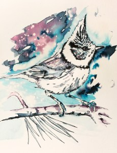Crested tit by Ka L-O-K   Graphic Arts