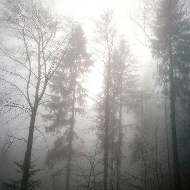 Forest | Forêt | Wald, Biel/Bienne