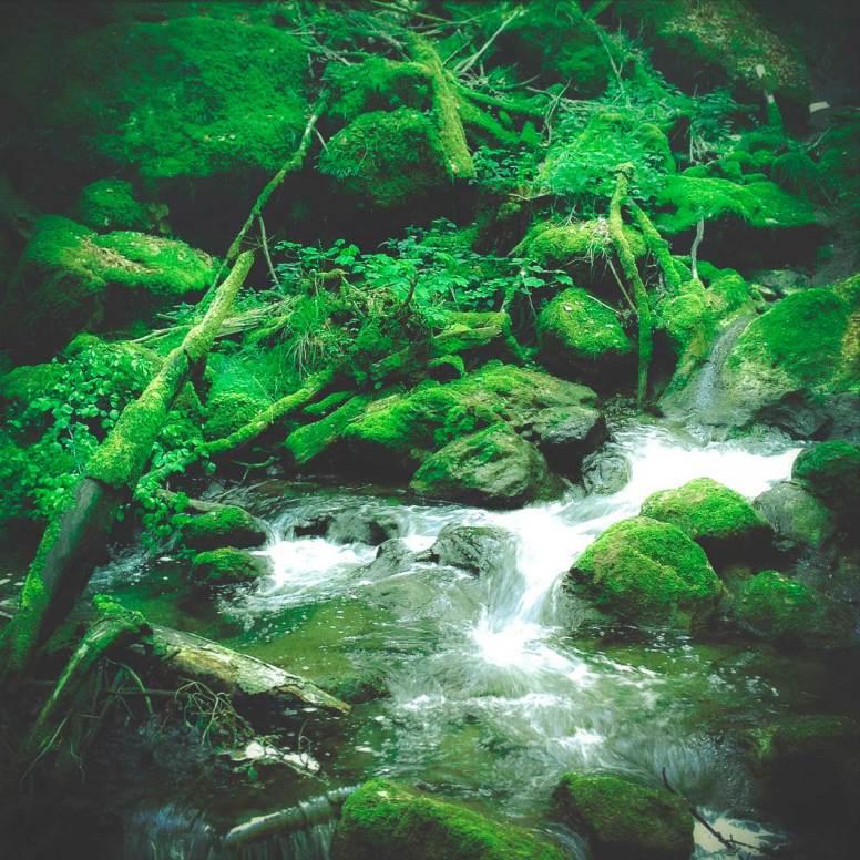 Green Lush picture by Ka L-O-K