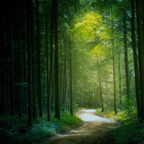 Moody Woods - through the woods   Ka L-O-K