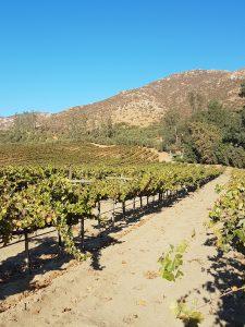 LA Cetto - ruta del vino - valle de guadalupe