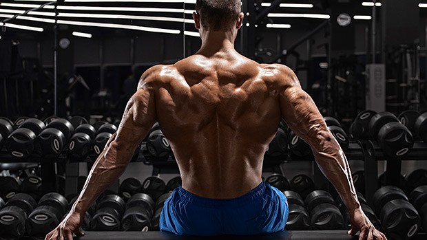 muscles-back-chest-gym