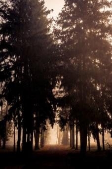 Siedziba LGD Zielony Pierścień w dworku Kossaków w Kośminie nad Wieprzem w gminie Żyrzyn - wizyta studyjna LGD Gościniec 4 Żywiołów w LGD Zielony Pierścień - fot. Andrzej Famielec | Kalwaria 24