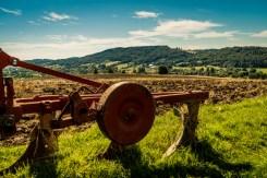 Rekonensans terenowy dotyczący przebiegu i zaawansowania prac związanych ze zbiorem zbóż - 28 lipca 2020 r. - fot. Andrzej Famielec - Kalwaria 24 -02427