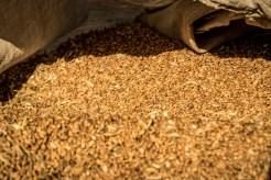 Rekonensans terenowy dotyczący przebiegu i zaawansowania prac związanych ze zbiorem zbóż - 28 lipca 2020 r. - fot. Andrzej Famielec - Kalwaria 24 -02433