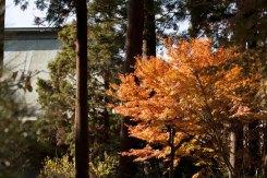 仏殿の裏手にある林。空間が美しく、梅や紅葉の隠れた見所です。