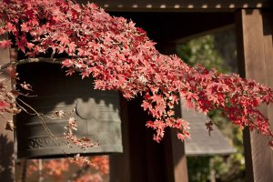 海蔵寺はまた、紅葉の名所でもあります。梵鐘のあたりが見所。