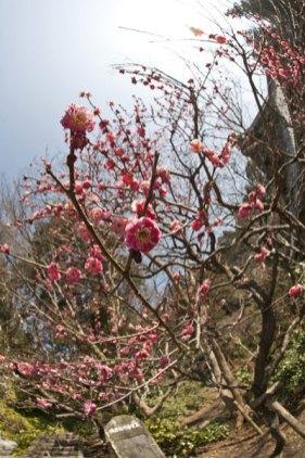 梅の周辺のイメージはこんな感じです。右手に祖師堂、左手に祇園山ハイキングコースへと続く道があります。