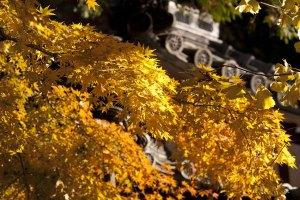 明月院。北条時頼墓付近の紅葉。