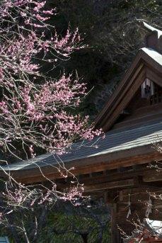 2月20日の撮影。よく咲いています。