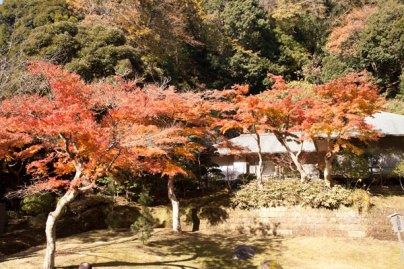 虎頭岩の紅葉。開けた景色と絶妙に配置された紅葉がきれいです。