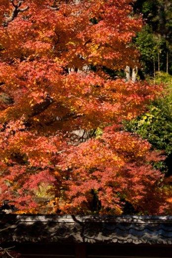 お寺さんの紅葉は紅葉以外の建物などが洗練されているのがたまりません。無粋な車や電線がないのも紅葉を引き立てます。