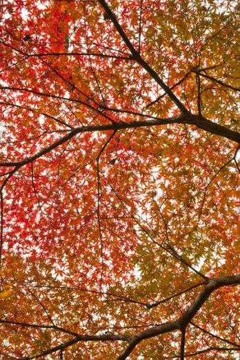 紅葉の絨毯。