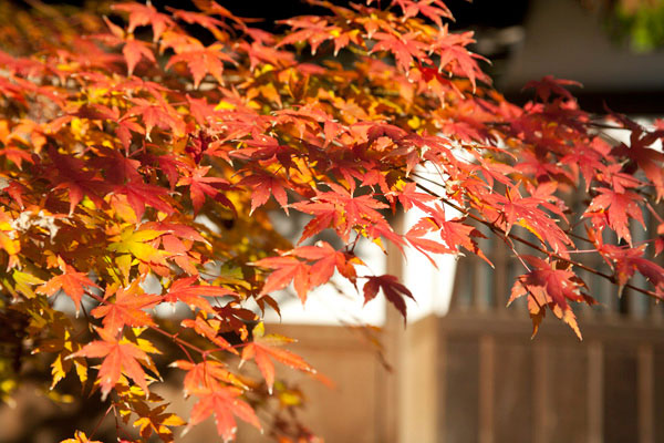 本堂を抜けて七福神へと向かうルートの途中。自然との素朴な調和が浄智寺の魅力です。