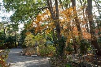 空間がきれいな神苑の杜に紅葉がはえます。