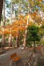 静寂感漂う鎌倉宮の紅葉。ベンチに座ってゆっくり楽しみましょう。